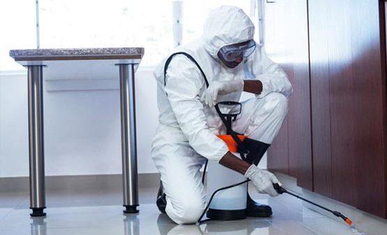 residential pest control London Ontario