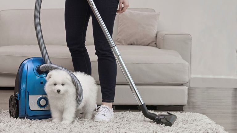 House Cleaning Experts Getting rid of pet hair and smell