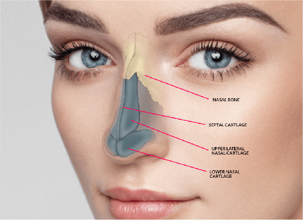 What Is The Purpose To Consider Nose Job Cost?