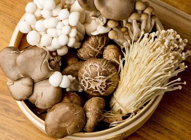 Uses of Mushrooms