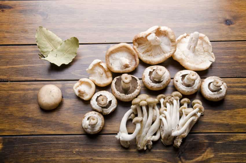 What is a Mushroom