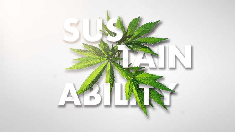 Growers Look For Sustainability In Resource Heavy Weed Industry