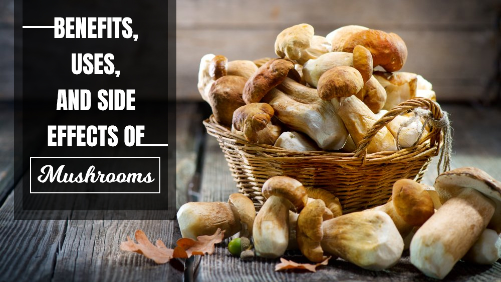 Uses, Benefits and Side Effects of Mushrooms