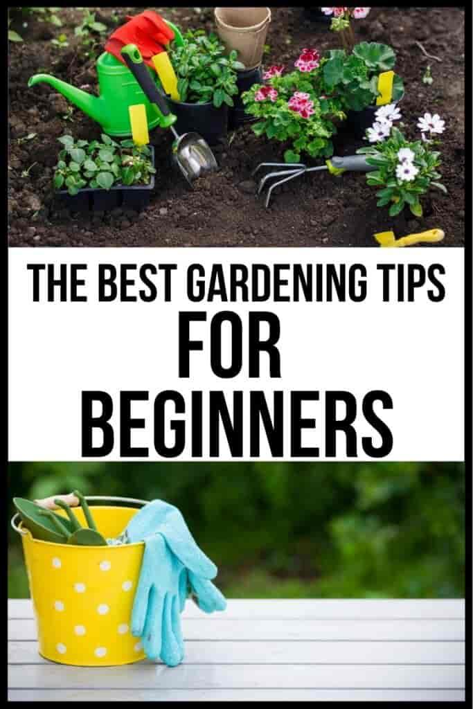 Some Gardening Tips That Help You Begin
